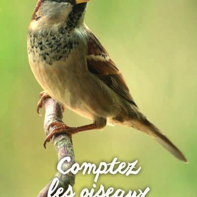 Comptage des oiseaux des jardins en Côtes-d'Armor les 27 et 28 janvier 2018