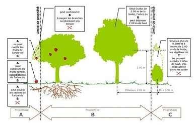 Élagage des arbres et des haies 51f7c7f5345feplantationettaillevegetaux-b4082