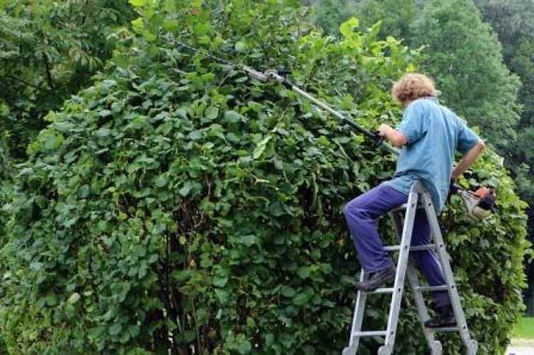 Élagage des arbres et des haies landscape-gardener-409147640-a40c6