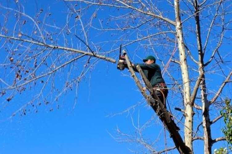 Élagage des arbres et des haies 0