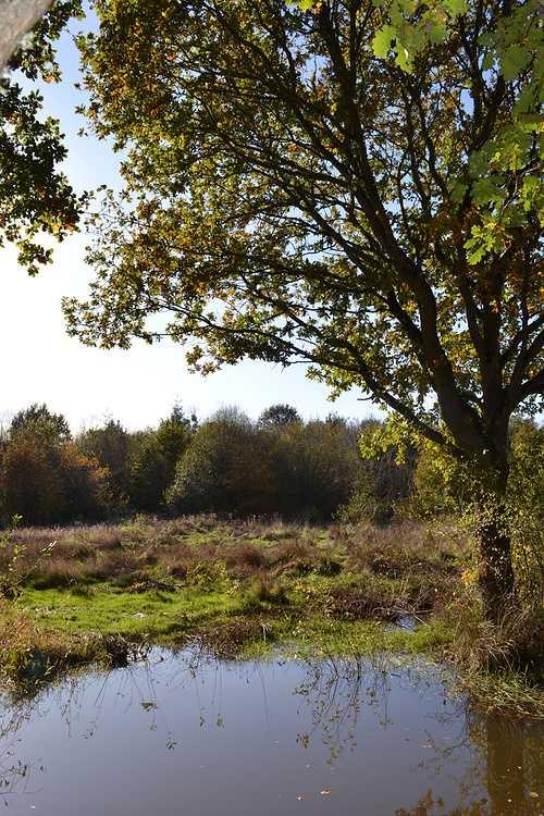 Arboretum de Carnivet dsc0324